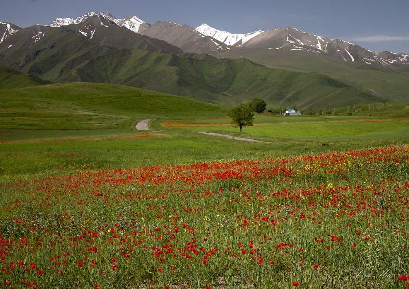 лето в казахстане картинки дело том, что