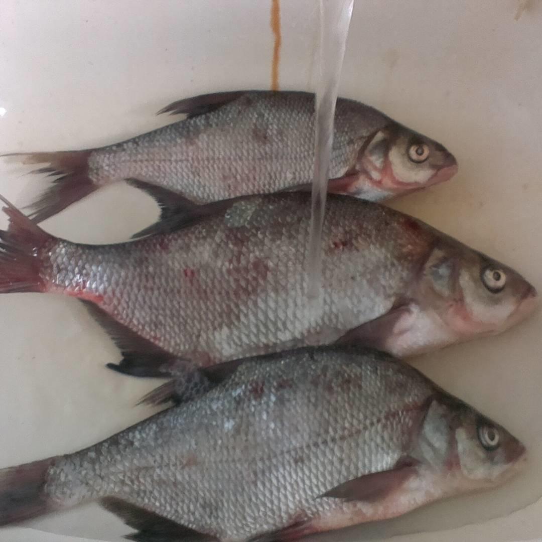 инете точных виды рыб в дону фото можно