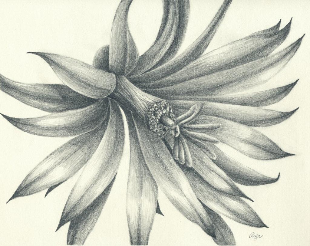 Картинки рисунки цветы карандашом, открытки своими руками