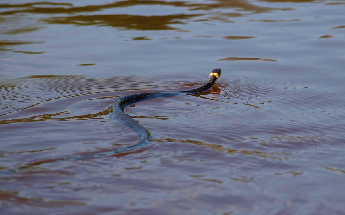 Возможно, сон про змей предвещает не самые приятные события в жизни, но трактовать его обязательно стоит.