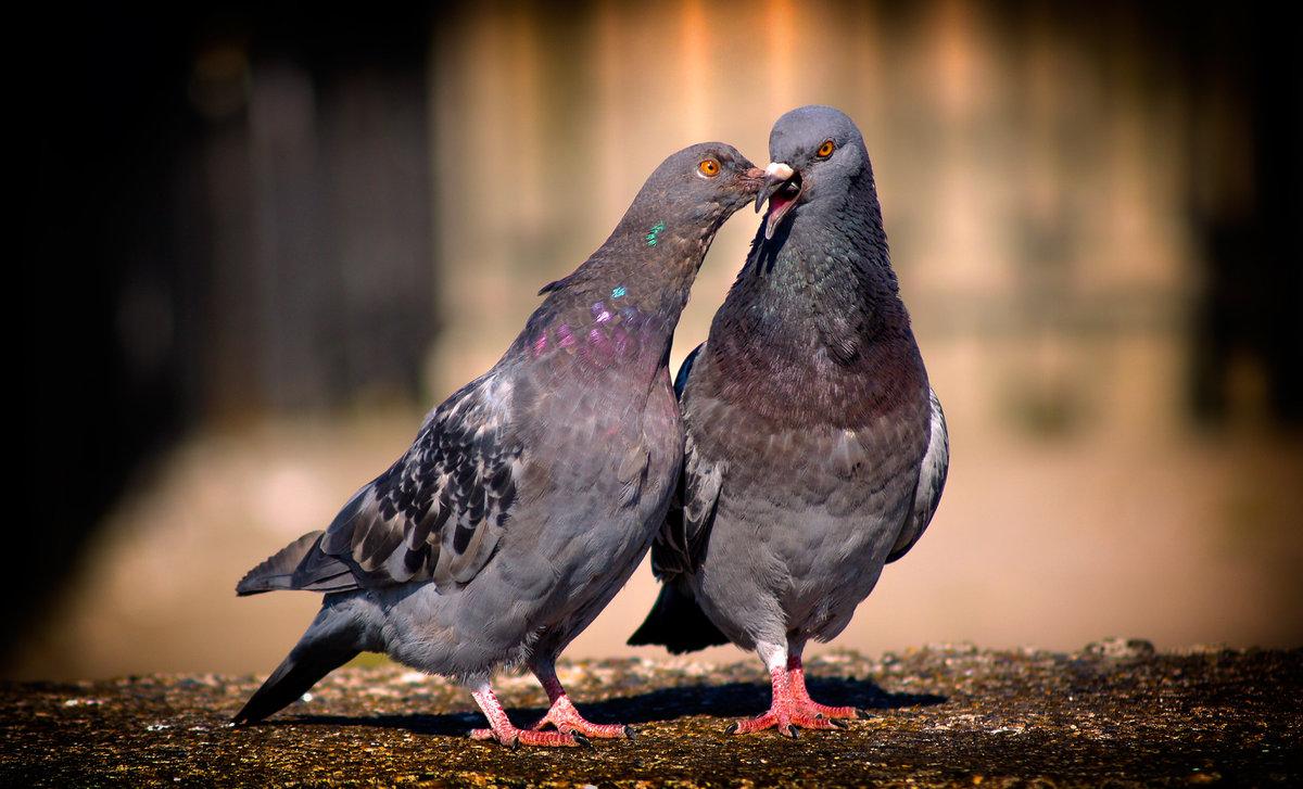 приснилось что знакомый фотографирует голубей именное поздравление