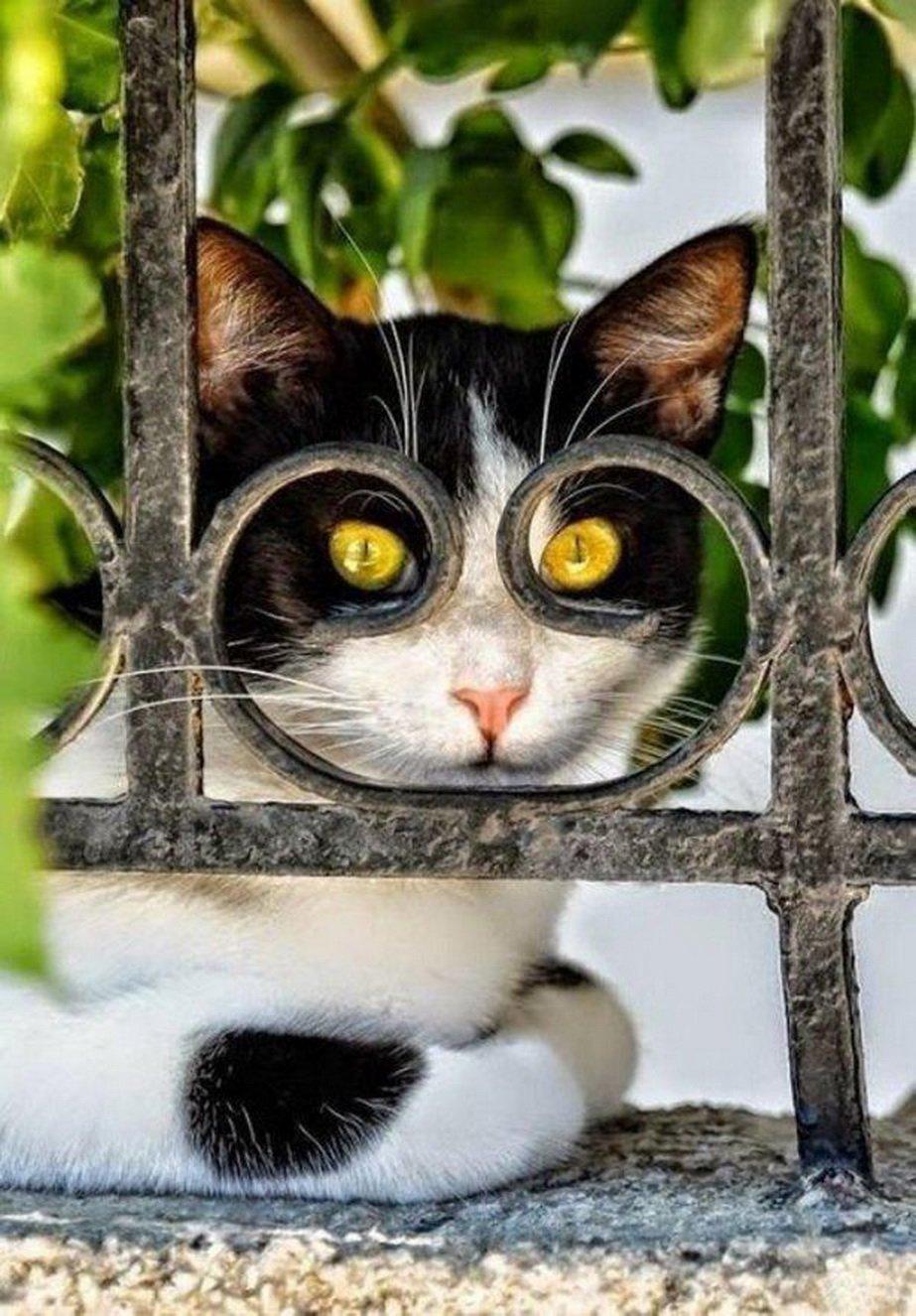 Смешные картинки коте