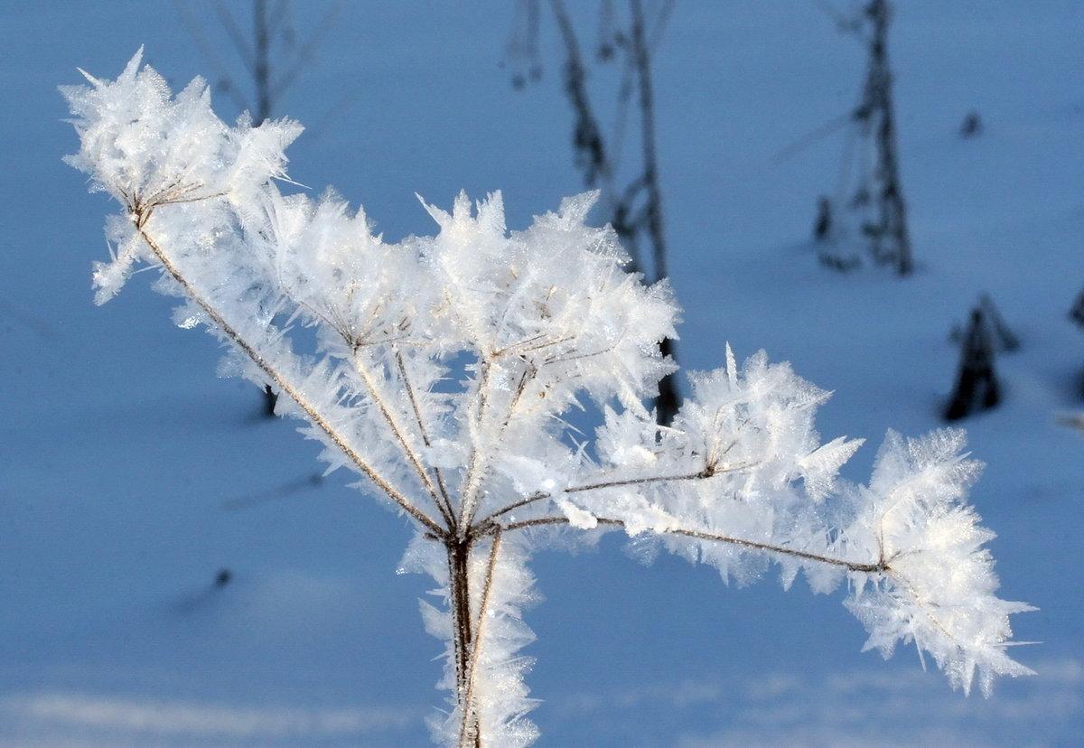 Картинки зима цветы, посвящения рыцари подпись