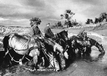 лошади на войне
