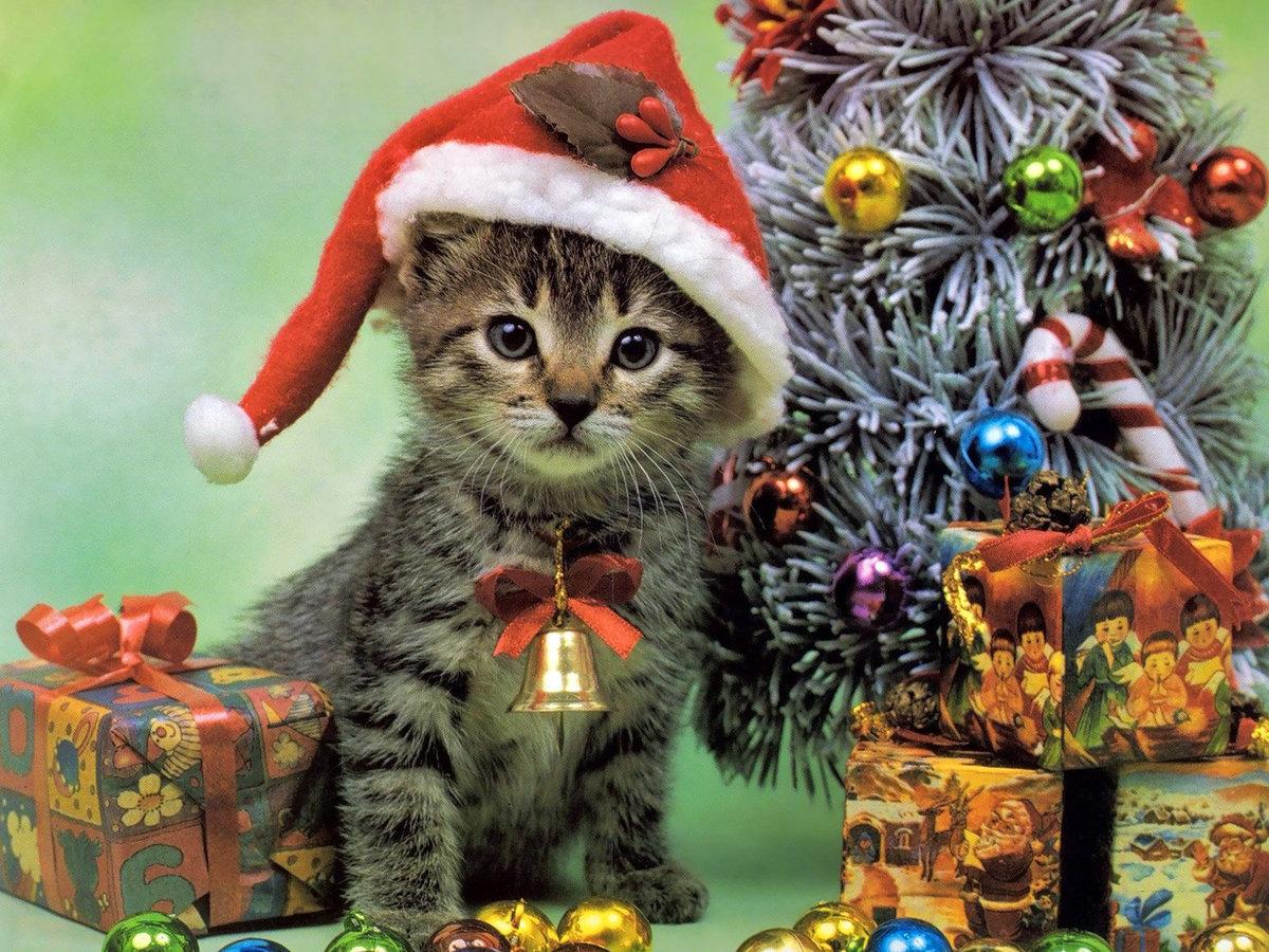 Открытка, новогодние открытки котята