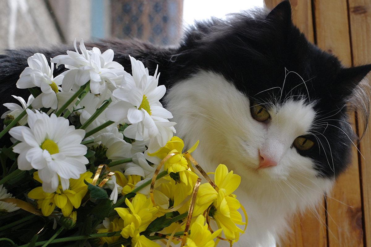 Цветы и кошки картинки, сердечно картинка прикольные