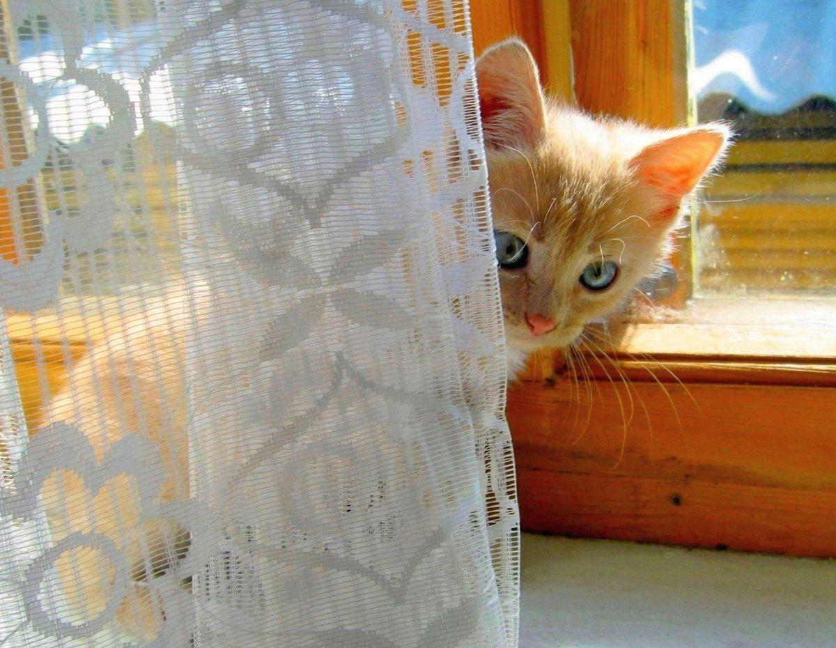 Тимка#взгляд #деревня #животные #занавеска #звери #кот #котенок #кошки #красавец #красота #малыш #окно #подоконник #позитив #портрет #прелесть #природа #солнышко #счастье