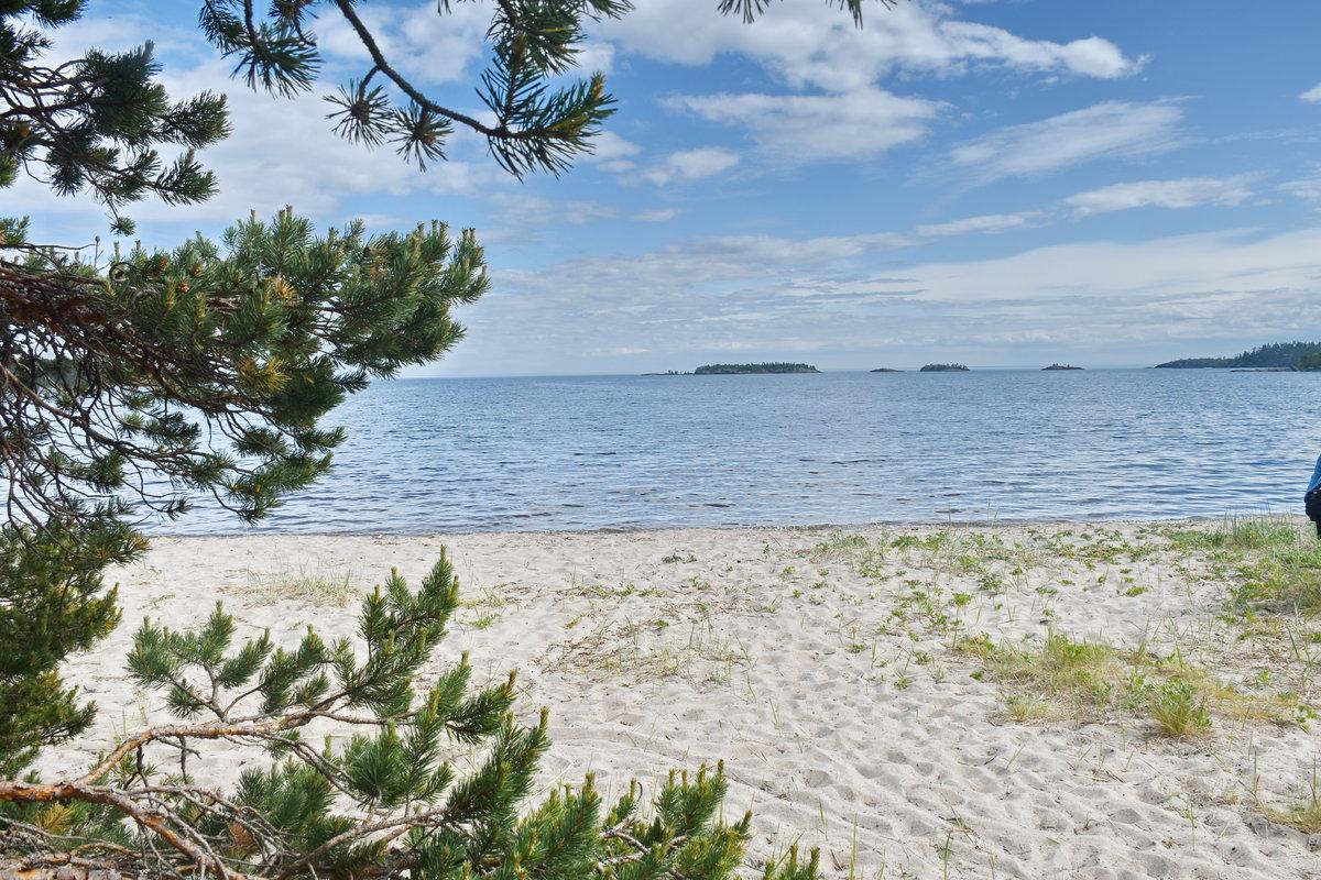 пажитника картинка соснового леса отдых на море качестве