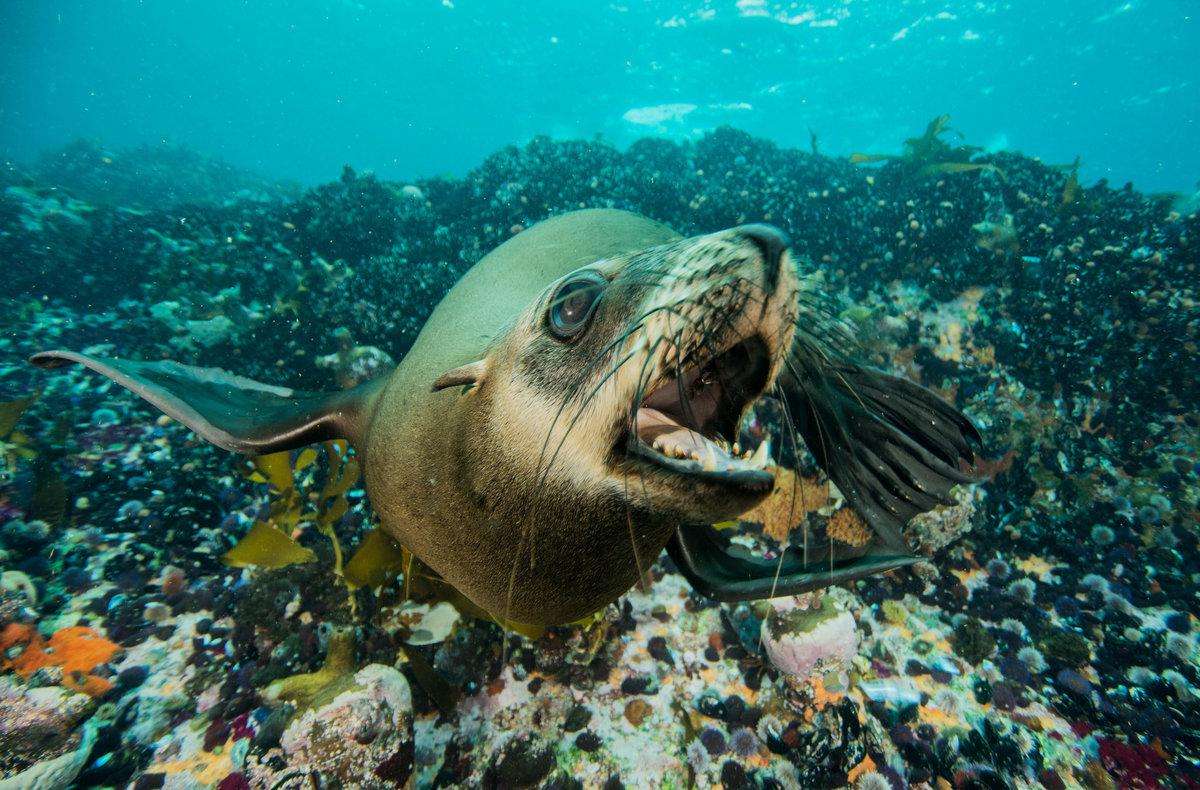 обитатели атлантического океана фото и названия
