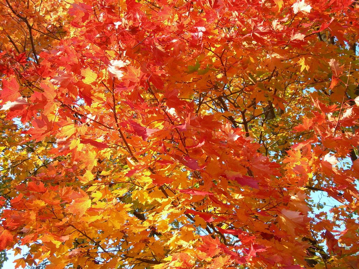 щенков осенние листья и деревья фото текста благодарственного