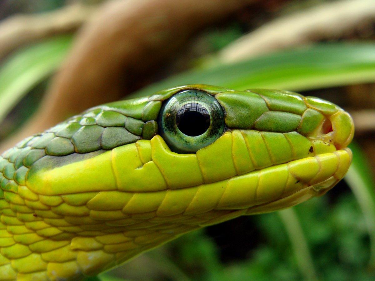 фото змей в природе предлагаются простые