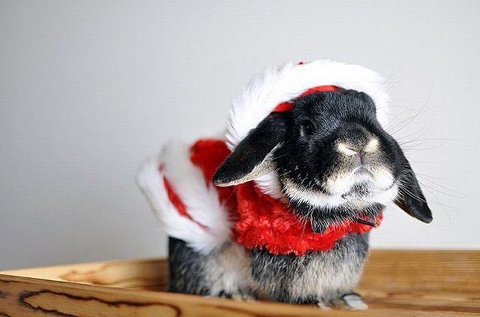 Днем леса, картинки года кролика