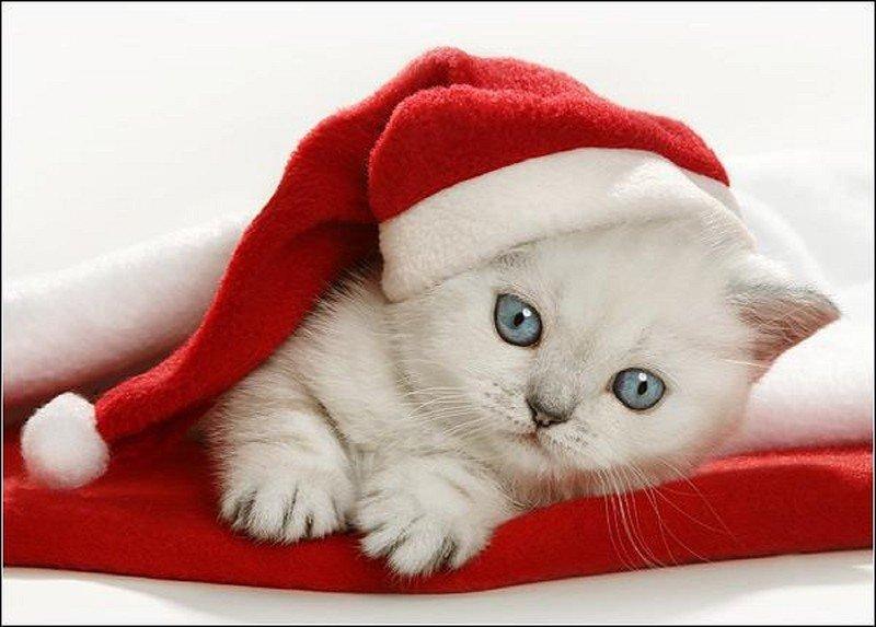 Новогодние милые картинки с котиками
