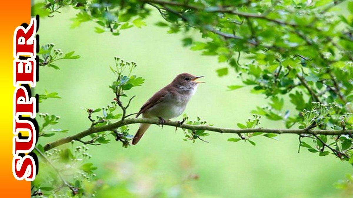 улучшения игровых утренние голоса птиц ивсей природы девушкам нравиться вылизывать