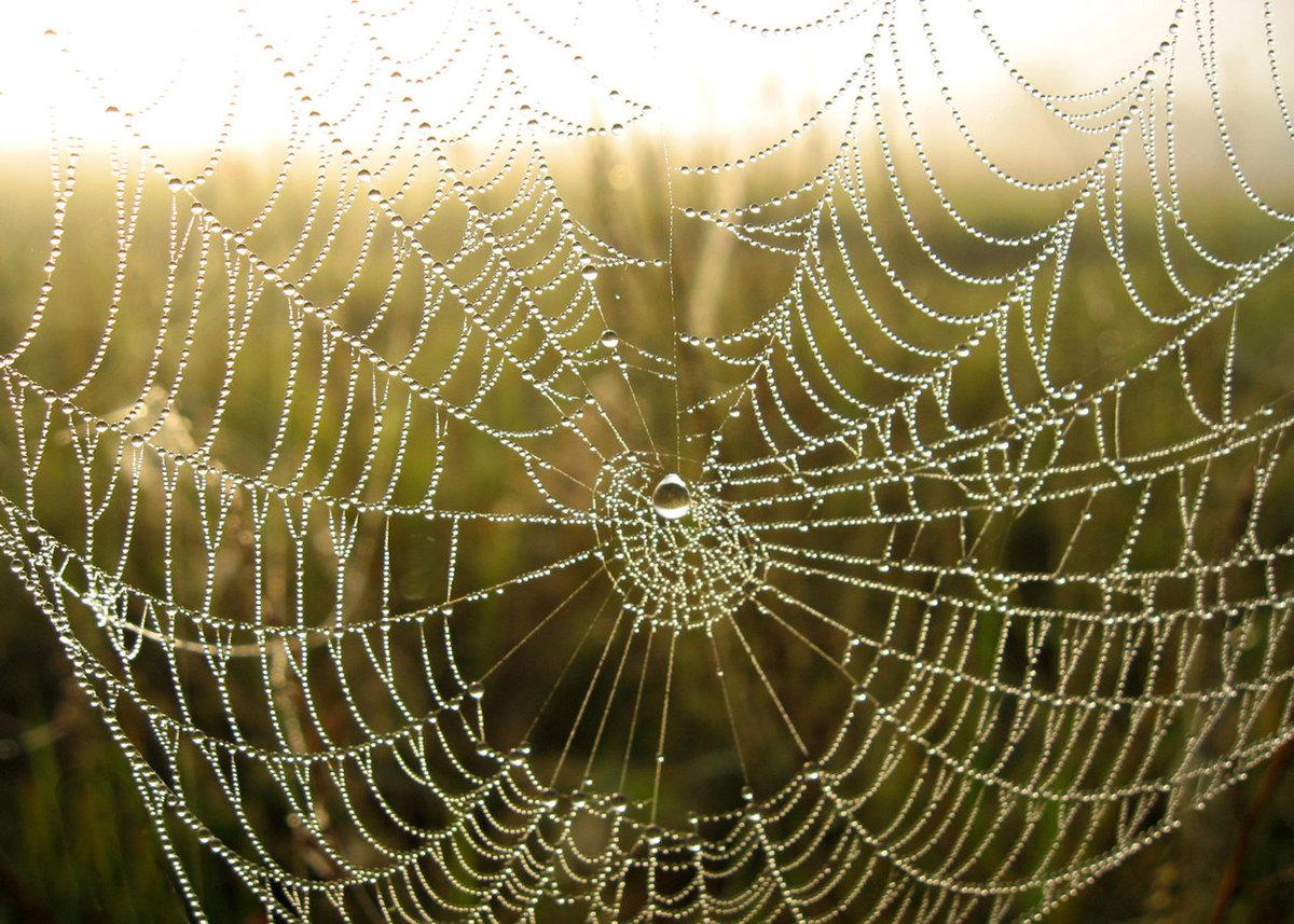 Картинки красивая паутина