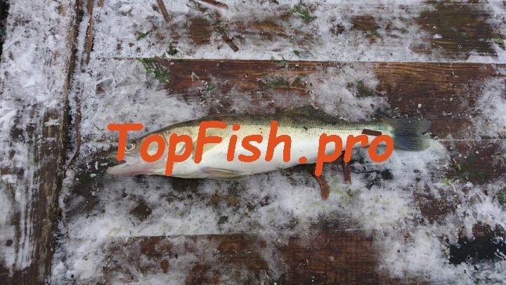Фишхангри (голодная рыба) заставит даже сытую рыбу с жадностью ...