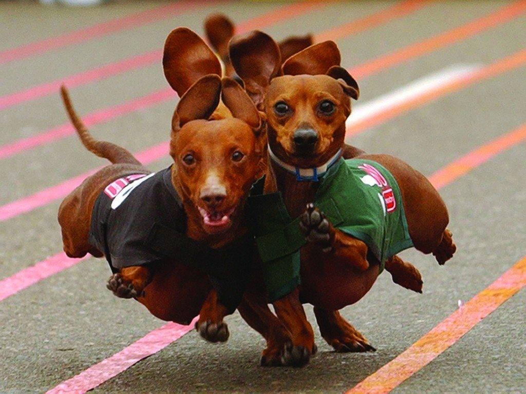 Днем, смешные картинки собак такс