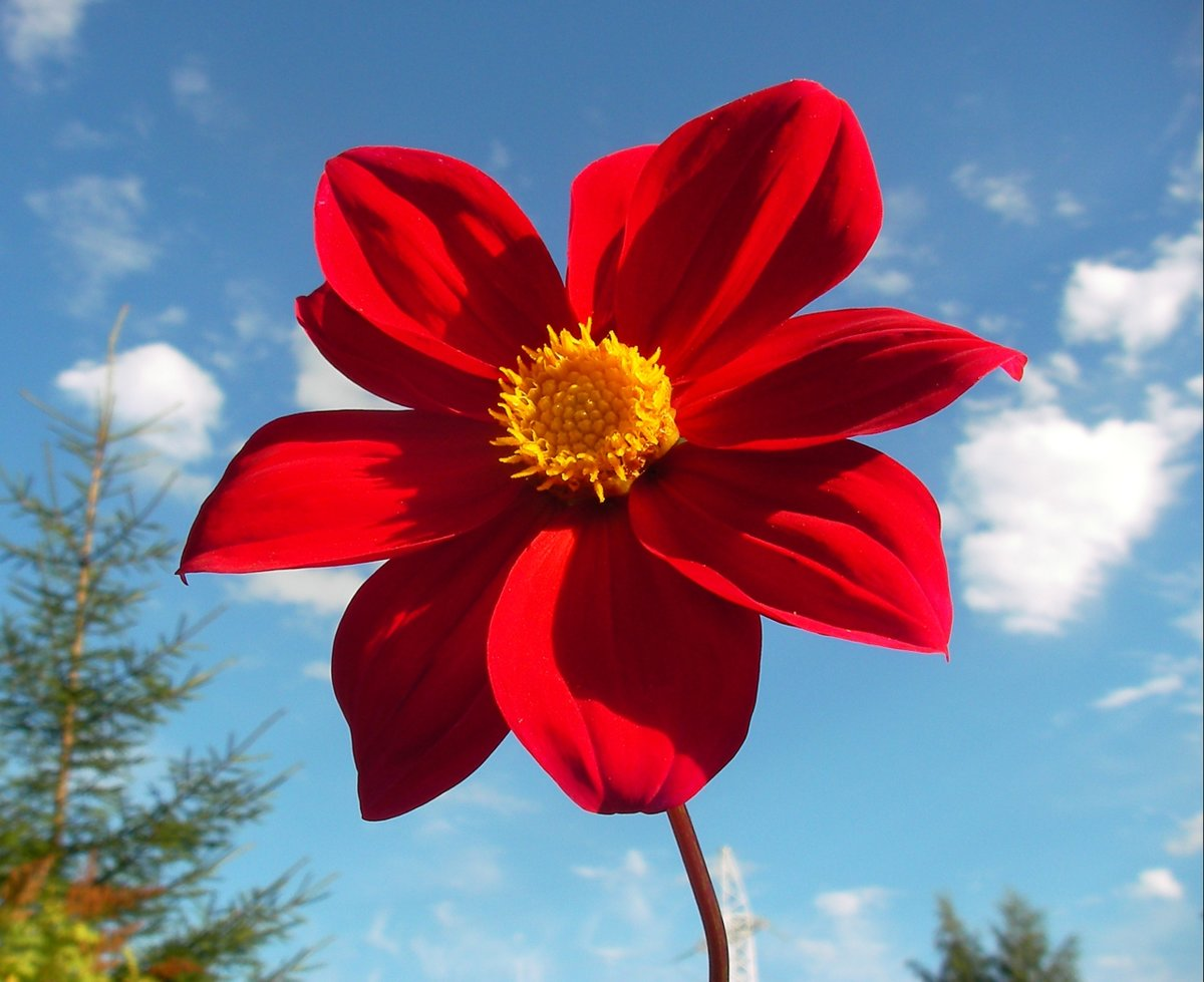 красивое фото аленького цветочка самый большой остров