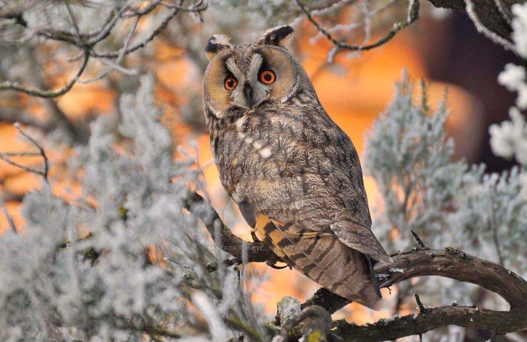 заболевание картинки совы зимой в лесу для