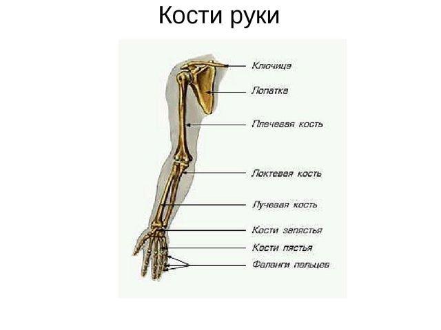 Кости на руке человека