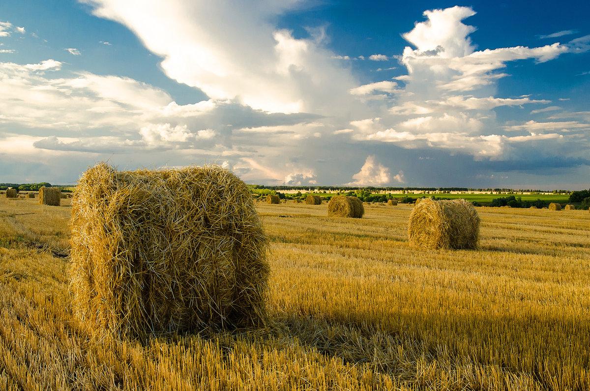 картинка с русским полем красавица, гора