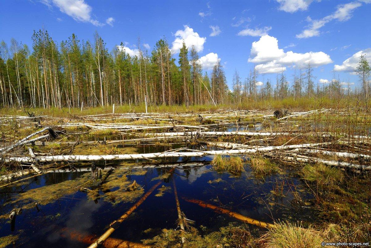 Картинки и фото с болотами