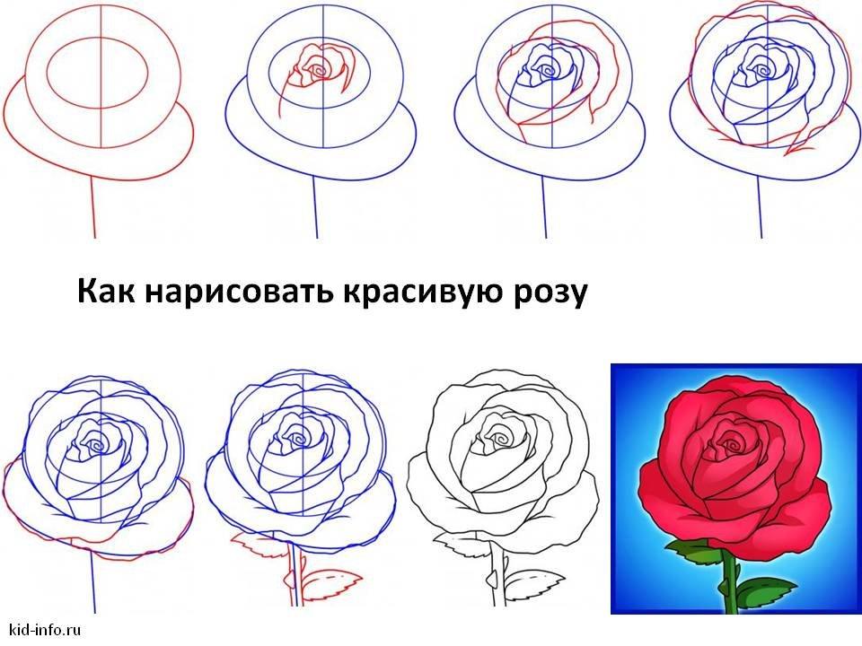 небольшая картинки роза как нарисовать всего