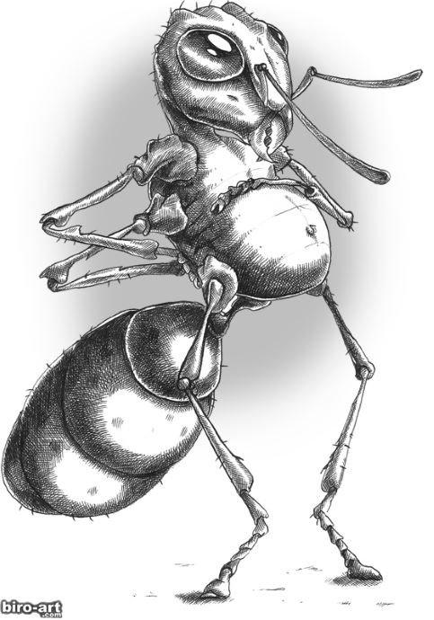 могут быть рисунки прикольных насекомых объявления