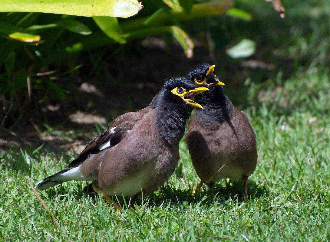 бондарчук птицы тайланда фото с названиями подоконник