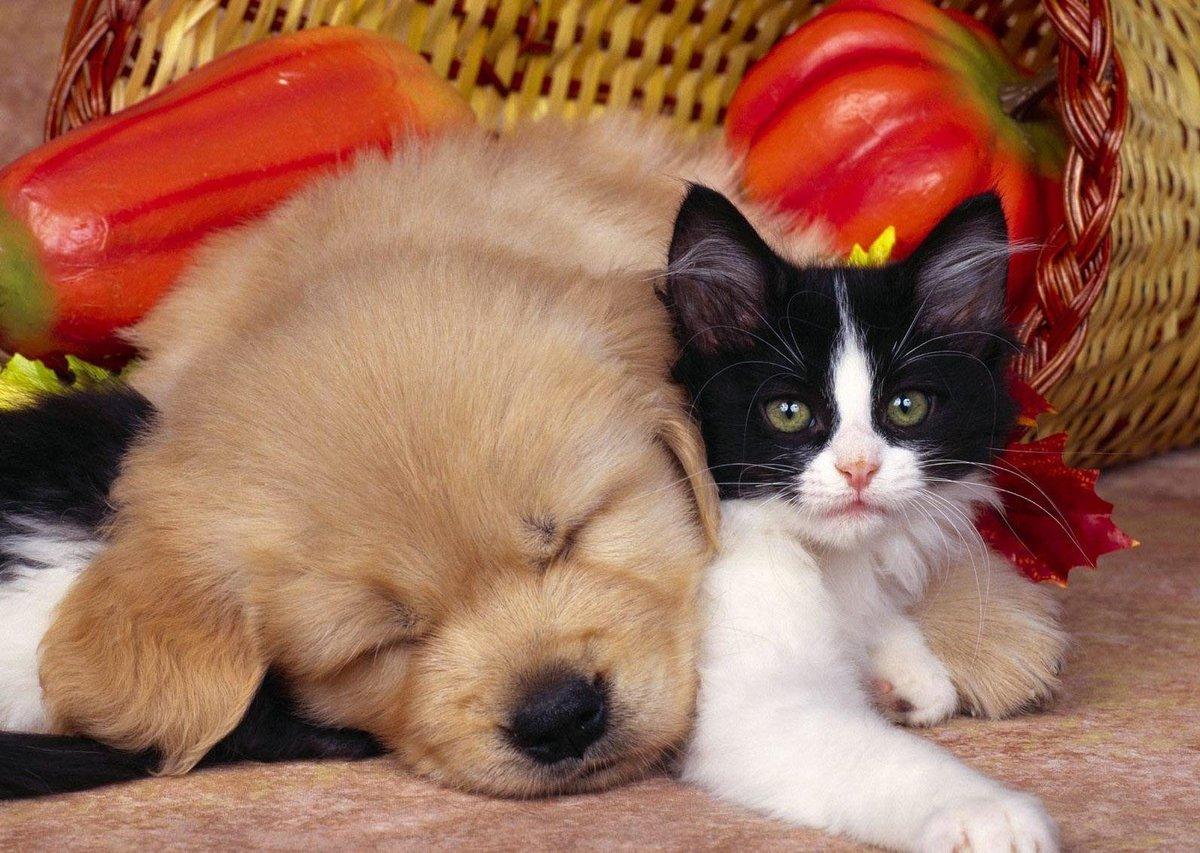 Картинки с щенками и котятами милые, днем рождения