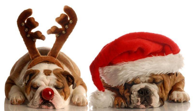 Прикольные картинки с новым годом собаки, картинки