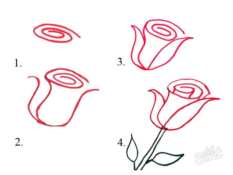 Картинки розы поэтапно карандашом красиво