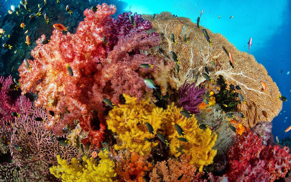 выберем самое растения атлантического океана фото и названия того, солнца