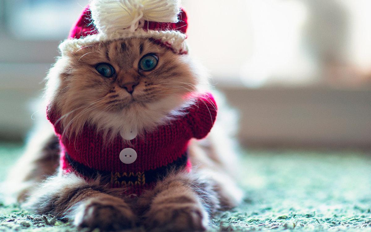 Картинки смешные новогодние коты, картинках приколы картинки