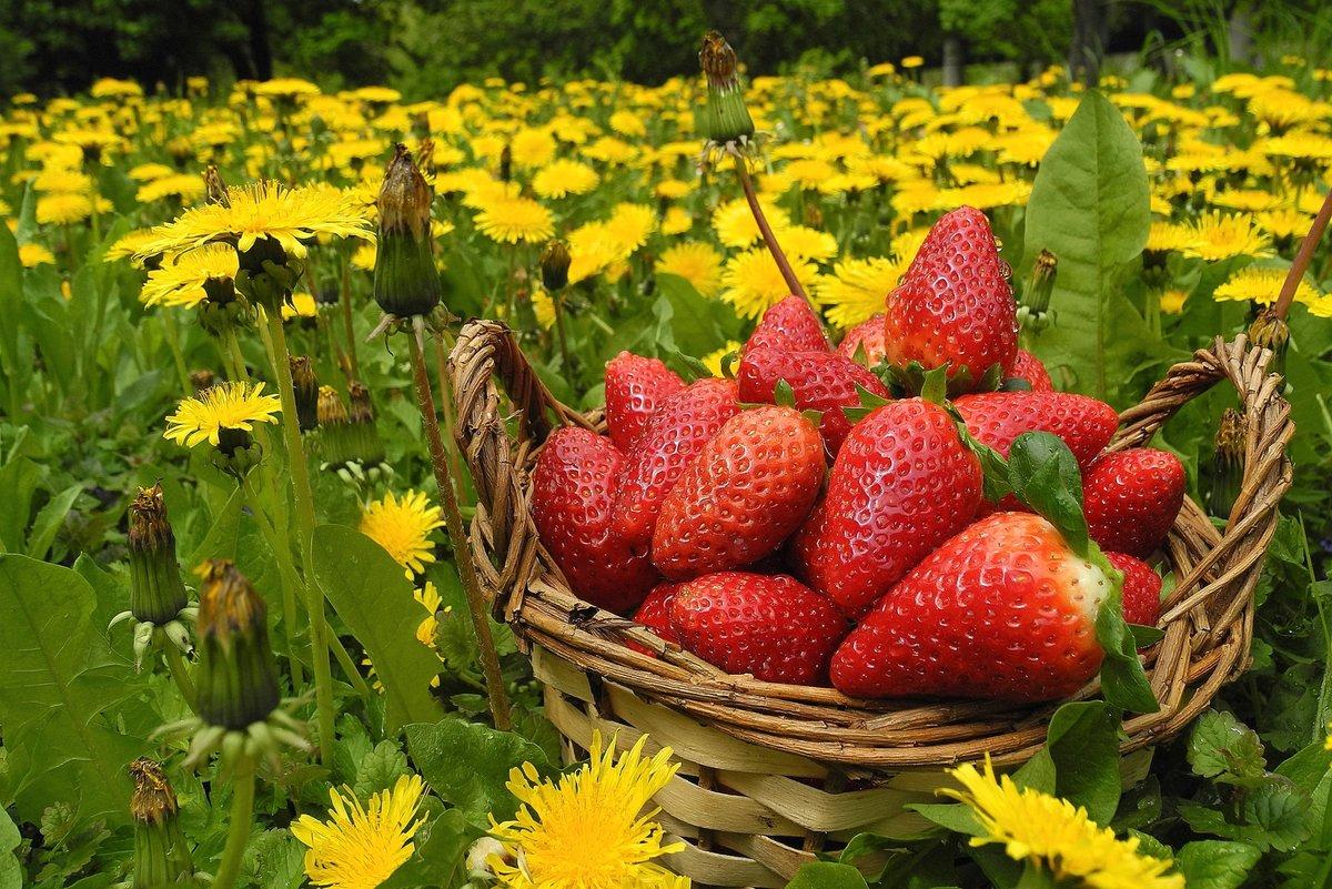 Картинки цветов и фруктов ягод