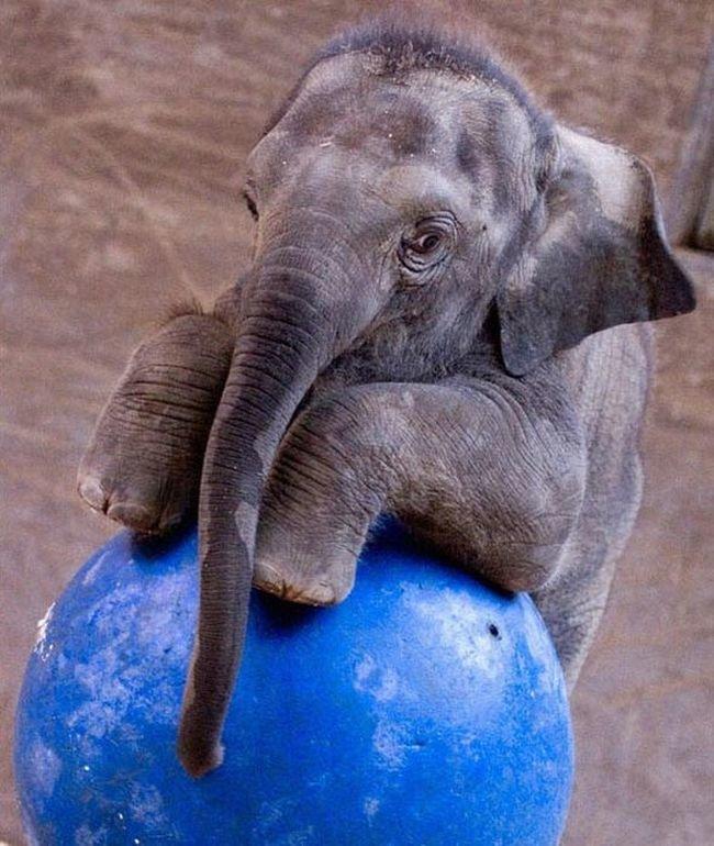 Картинка прикольного слона