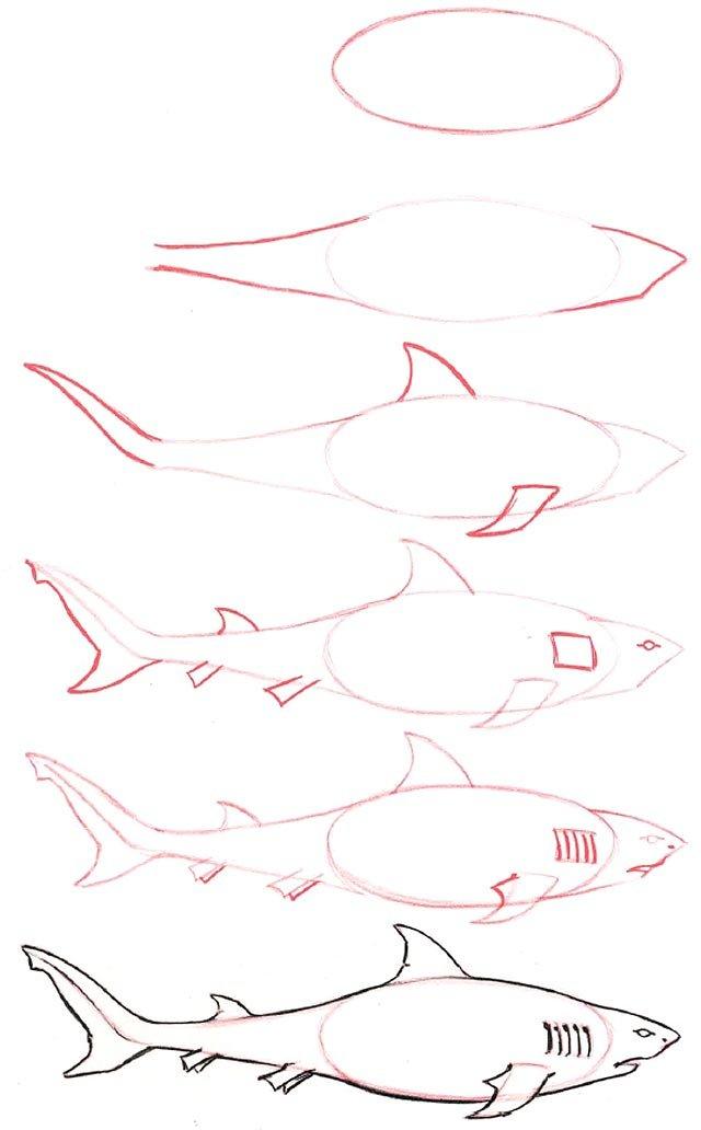 Картинки как нарисовать акулу карандашом