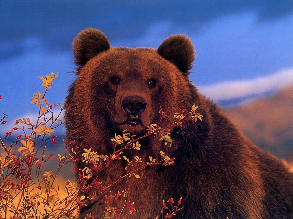 Приколами, медведь фото и открытки