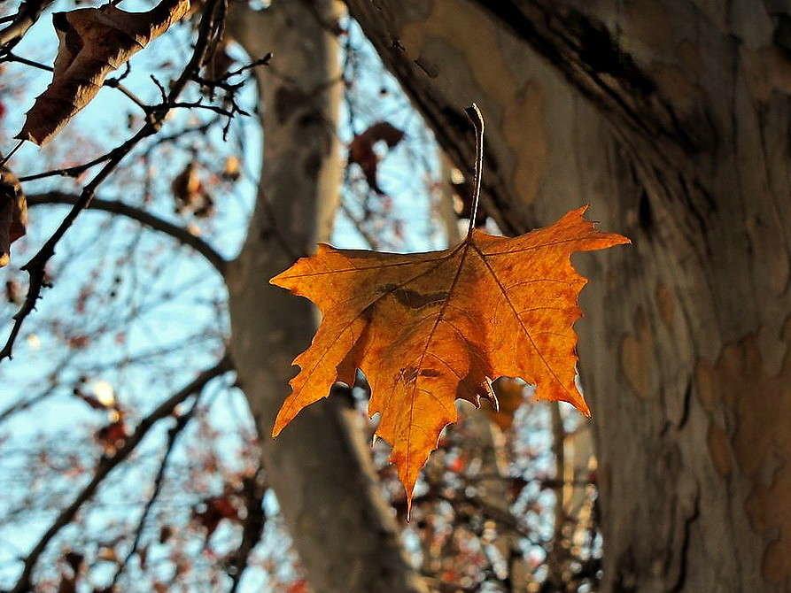 Картинки падающих листьев с деревьев