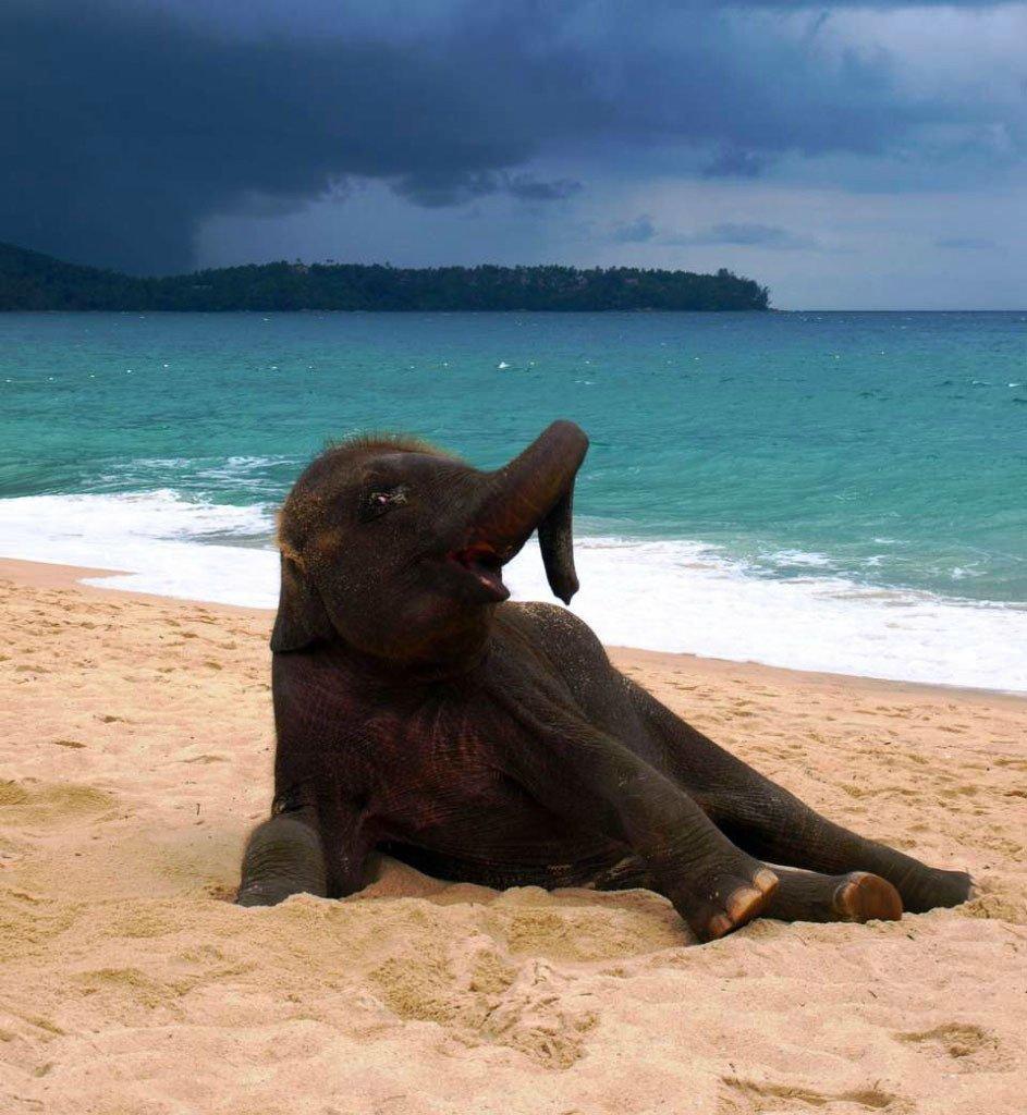Смешные картинки в море, открытка скрапбукинг мастер
