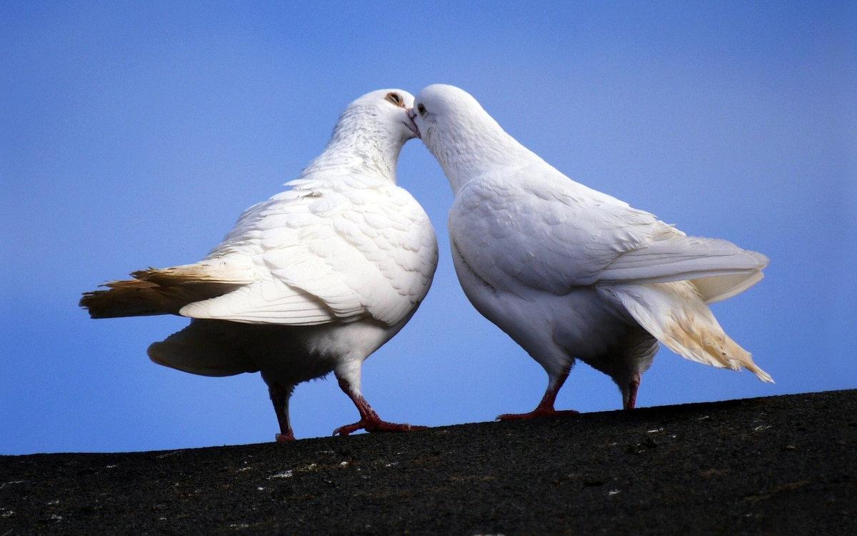 подобранный гель голуби баян картинка страна