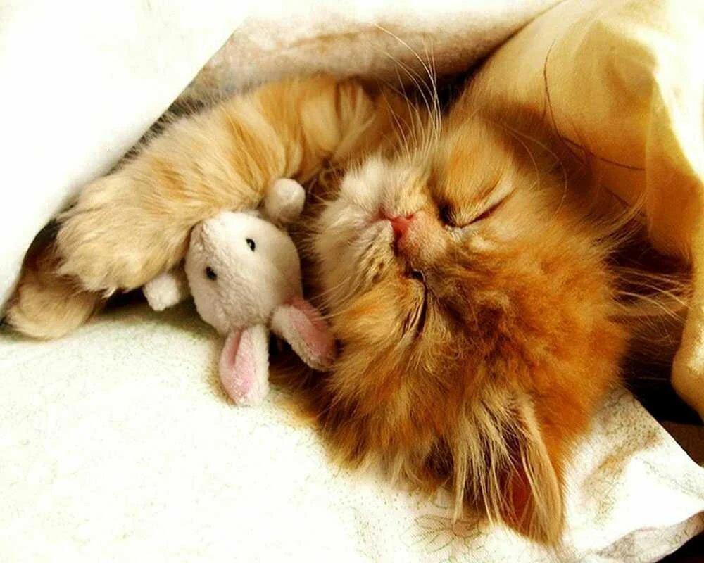 Картинки доброе утро мой сладкий котенок