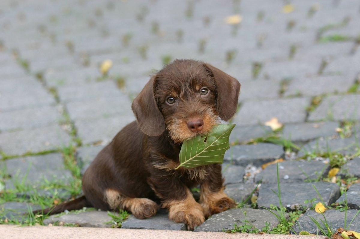 Открытка обрезание, картинки собак щенков смешные картинки