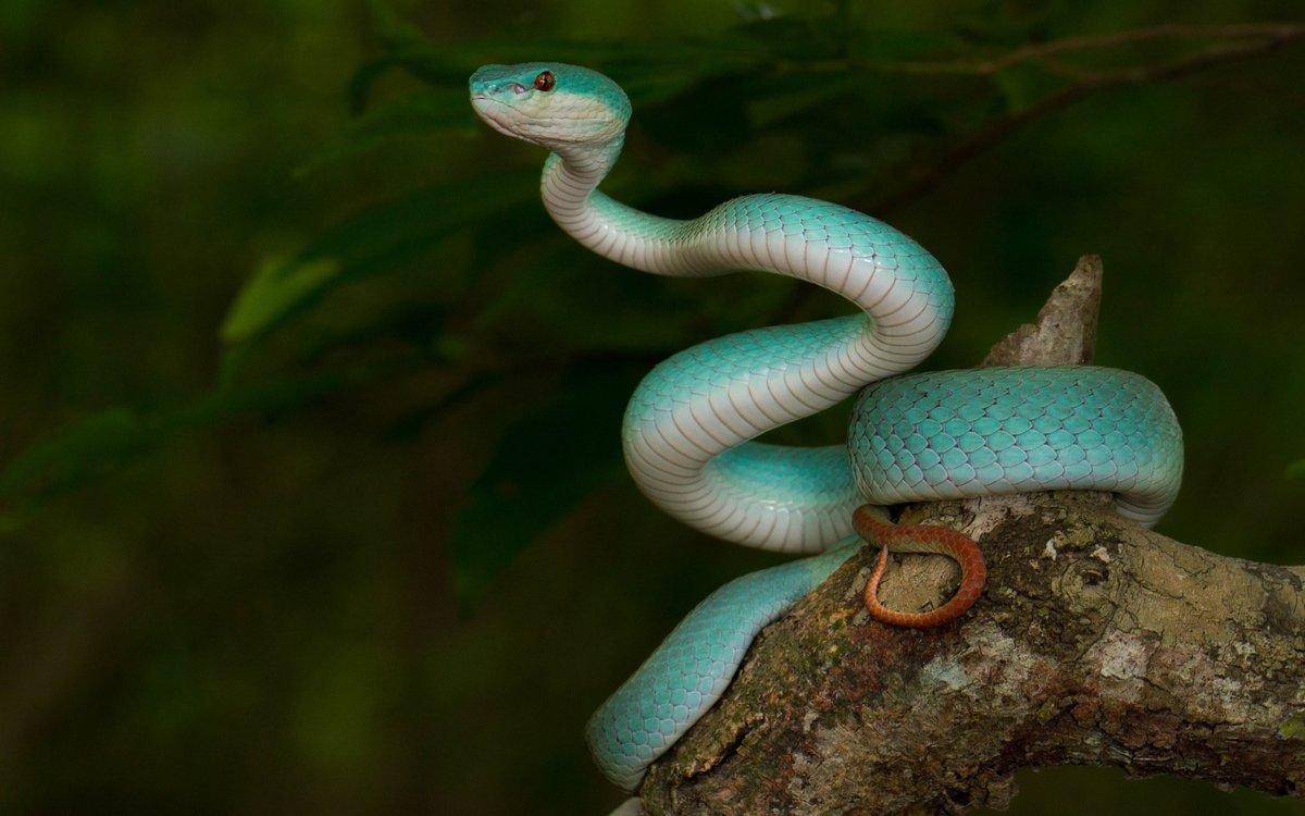 самые красивые змея в мире младшей
