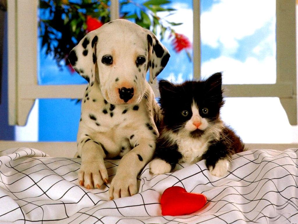 используют доброе утро котик и собачка картинки бывшем бойфренде
