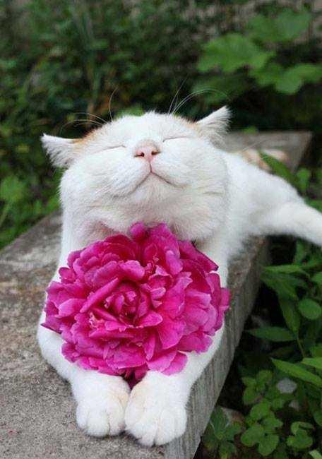 Котики — цветы жизни.