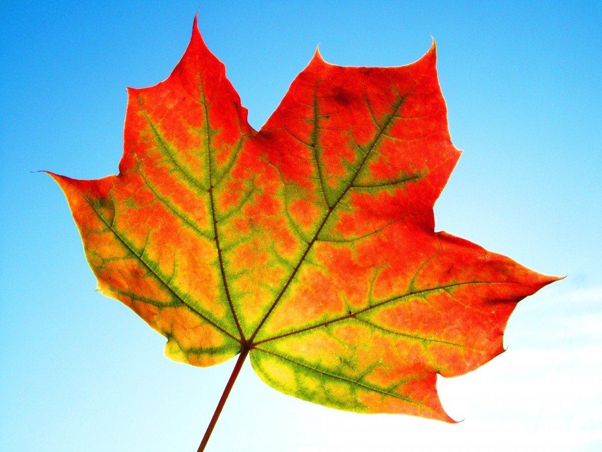 картинки осенних листиков деревьев страницах