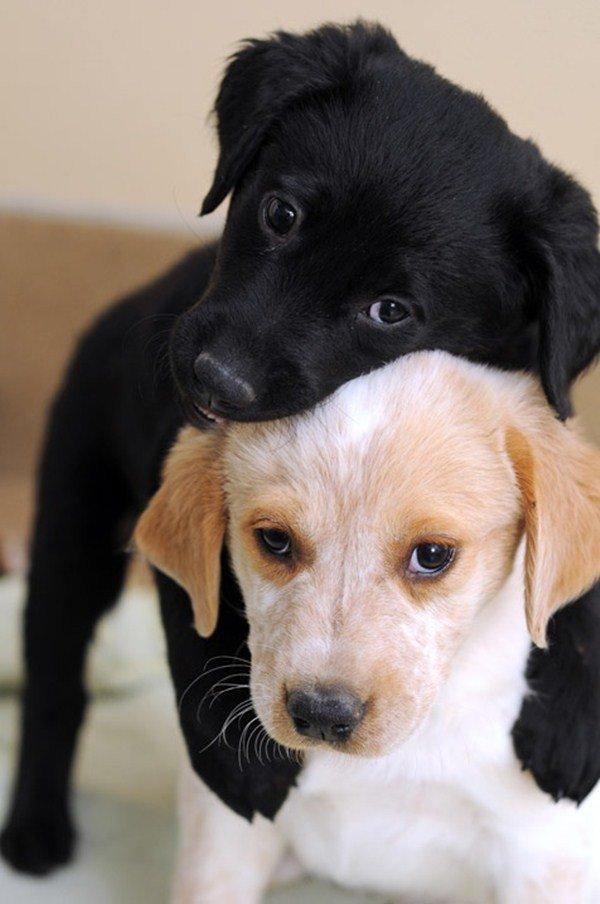 Милые картинки с собачками