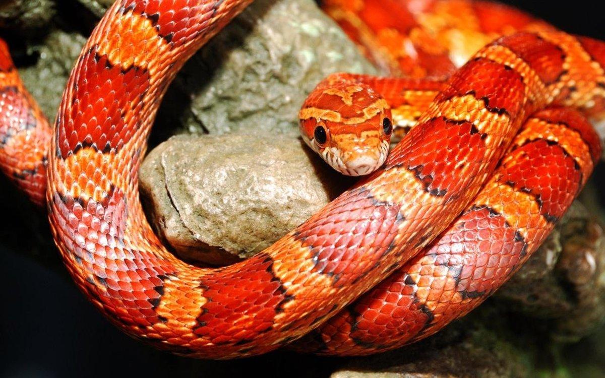 Картинка со змеями, открытки подруге открытки