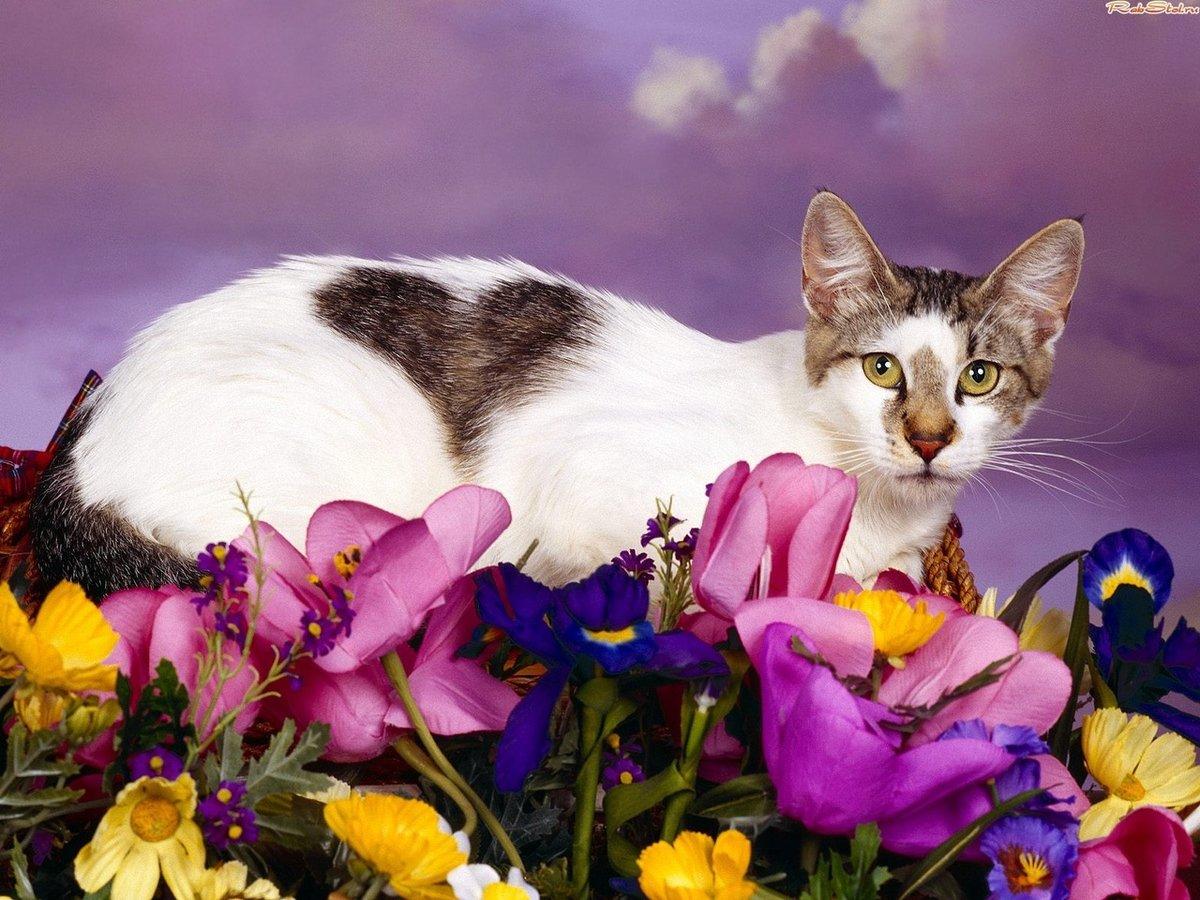 Кот в цветах картинки, прикольные